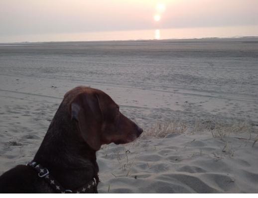 artrose hond medicatie